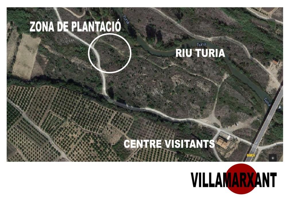 Repoblació forestal al Parc del Túria (2/4)