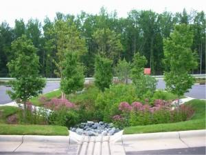 Rain garden installed to capture polluted stormwater runoff from an asphalt parking lot.