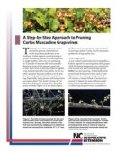 A Step-by-Step Approach to Pruning  Carlos Muscadine Grapevines