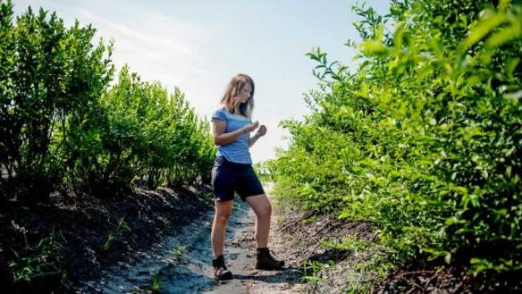 Maggie Schraber in blueberry field