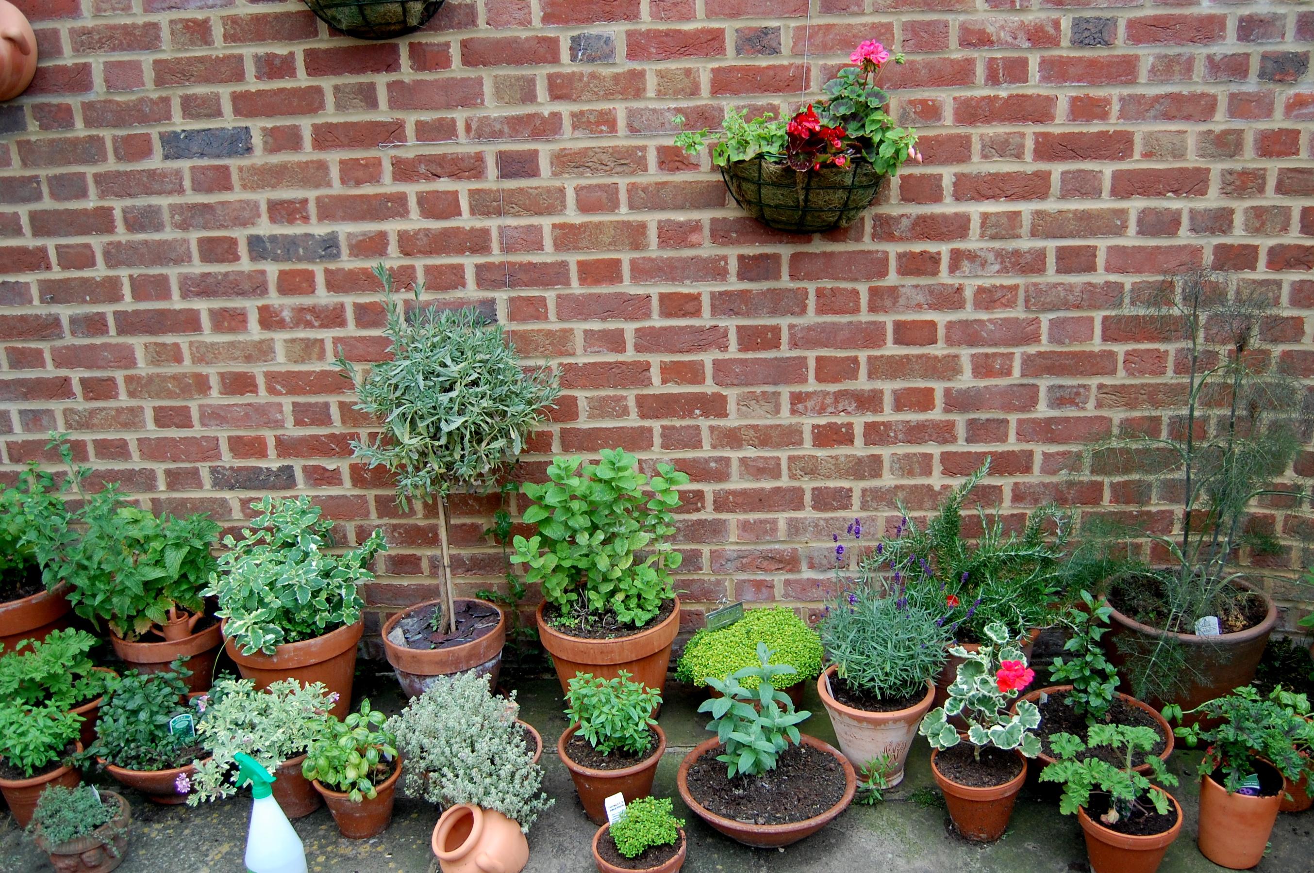 More of the herb garden