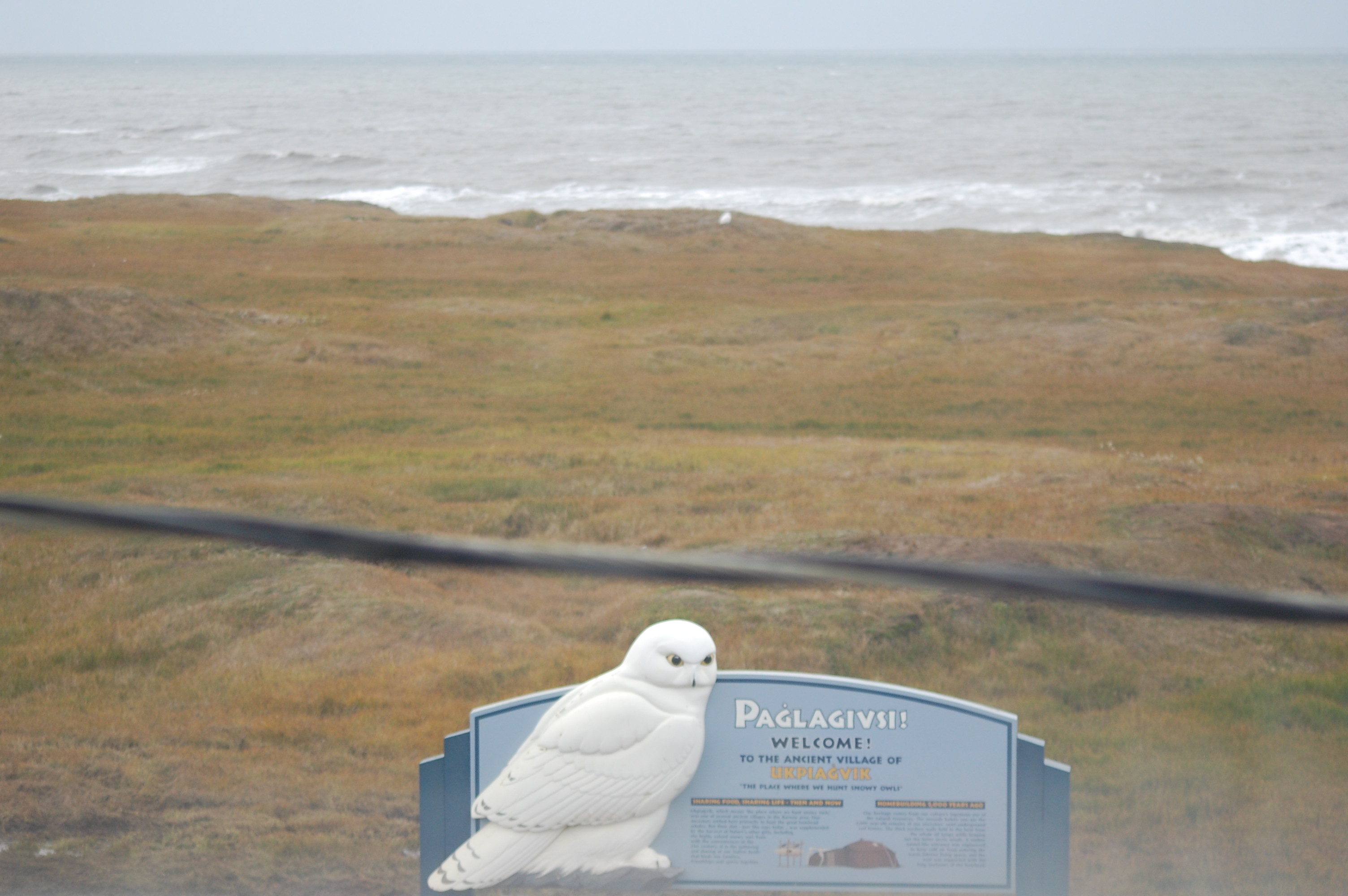 """The reason that I thought that the 2nd owl was ballsy was that it was sitting a few yards away from this sign which reads, """"Welcome to the ancient village of Ukpaigvik 'The place where we hunt snowy owls'""""."""