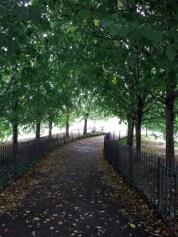 A Linden (Tilia cordata) Allee leads you into the Narrows Botanical Garden