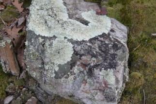 Lichens on a Boulder Seneca Rocks West Virginia
