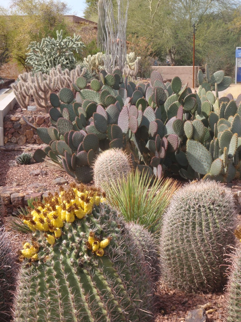 Cactus at Desert Botanical Garden, Phoenix, AZ