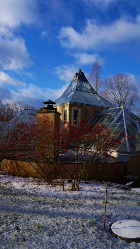 """Illex verticillata """"Winter Red"""" """"Winter Berry"""" -- outside of the conservatory"""