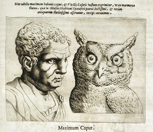 Illustration of Man v. Owl