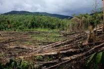 Slash and burn field aka temuda on the walk from Long Main to Long Kepang