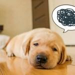 片頭痛の対処法と日頃気をつけていること
