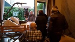 hospice-paard-dec-191