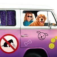 Mareo del perro en el coche