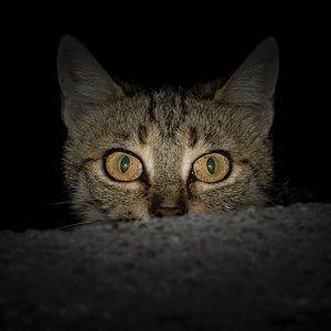 personalidad gato asustadizo