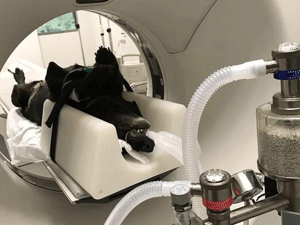 especialidades veterinarias neurología y neurocirugía veterinaria hospital veterinario aitana 24 horas