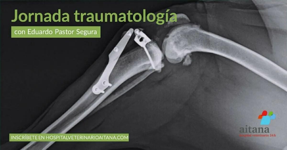Jornada de traumatología veterinaria en el hospital veterinario Aitana, en Valencia