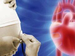 过度发生的焦点在胎儿心脏的左心室