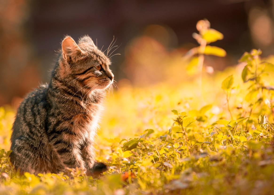 kitten sitting in a field