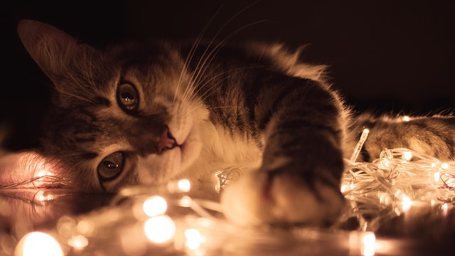 kitten laying on side playing with lights