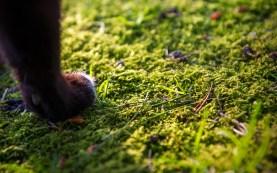 Moss paw