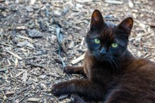 Felidae :D