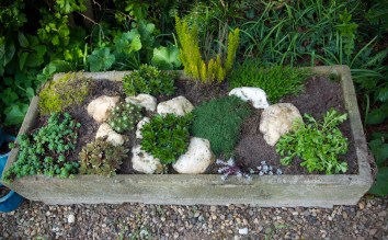 The mini rockery has survived the winter.
