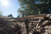 11-8-2014_Loki_Boyscouts_Lost_Valley_Camp_JPY6254