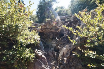 11-8-2014_Loki_Boyscouts_Lost_Valley_Camp_JPY6286