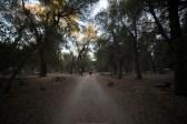 11-8-2014_Loki_Boyscouts_Lost_Valley_Camp_JPY6351