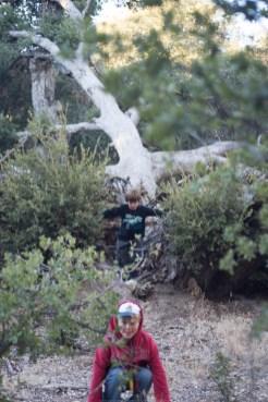 11-9-2014_Loki_Boyscouts_Lost_Valley_Camp_JPY6464