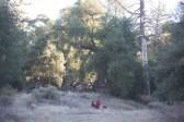 11-9-2014_Loki_Boyscouts_Lost_Valley_Camp_JPY6468