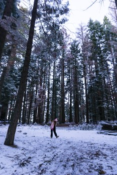 3-31-2016_The_Great_Spring_Break_Road_Trip_of_2016-Death_Valley-Sequoia-Yosemite__DSC2178