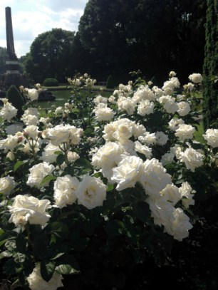 The roses of Blenheim Palace.