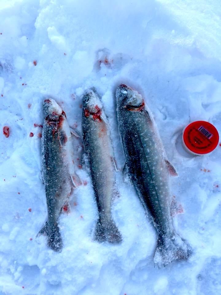 Röding till middag. Foto Karin Carlsson