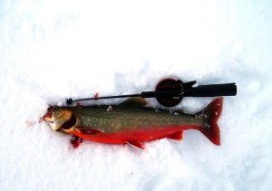 Nyfångad röding på isen. Foto Kjell-Erik A