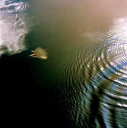 Fiske i Hotagsbygden. Foto Kjell-Erik A