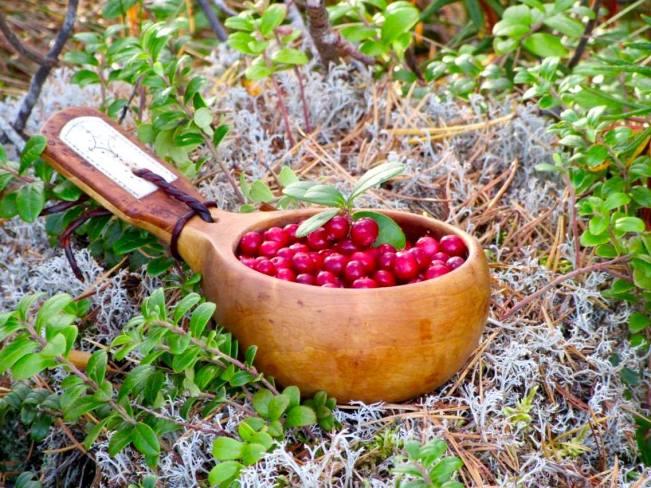 Kåsan full med lingon i Hotagsbygden. Foto Urban Dimberg
