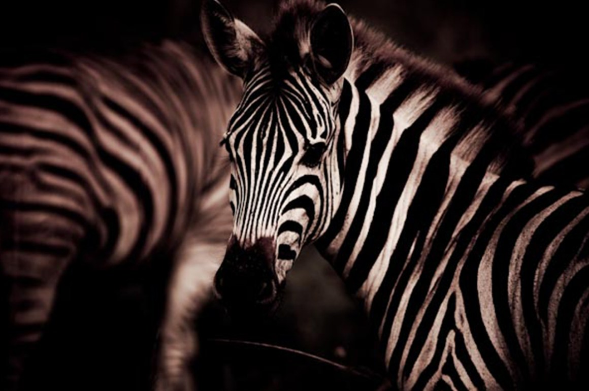 andBeyond Sudáfrica - galeria15_home