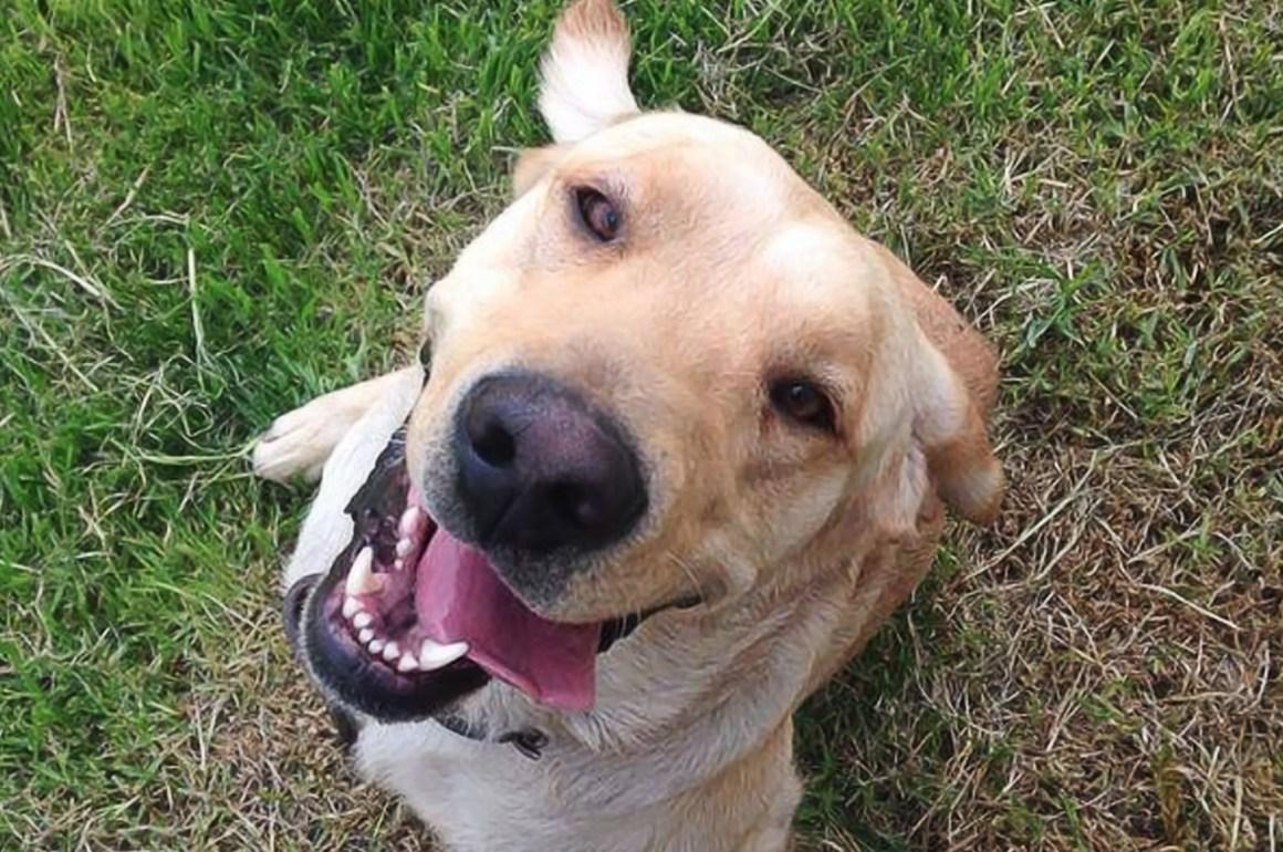 Dogin Hood A.C.  Una causa que te cambiará la vida - perro