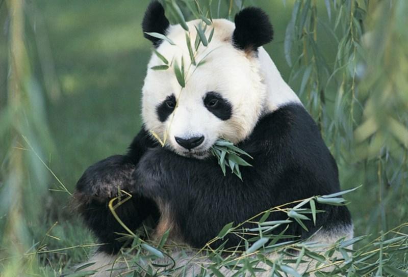 10 animales en peligro de extinción - animales_galeria10