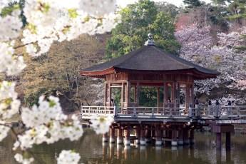 JAPÓN: CON CORAZÓN TRADICIONAL - PORTADA_japon