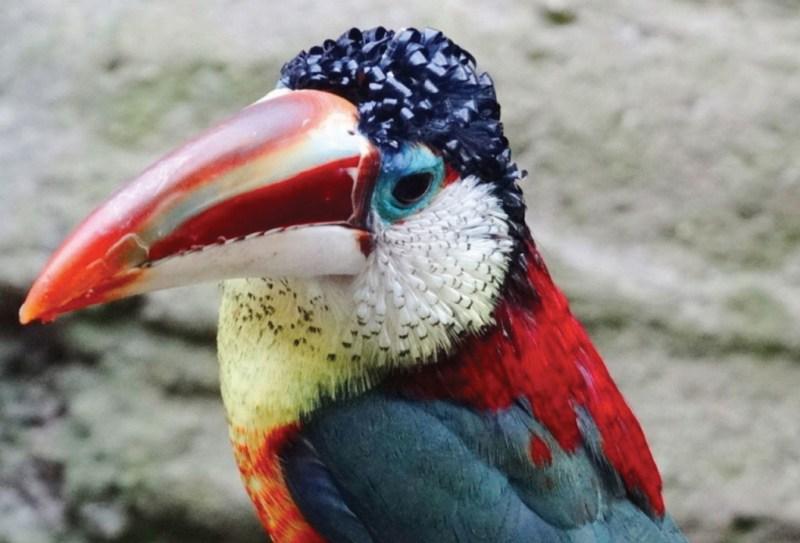 La especies más exóticas del mundo - ee7-1024x696