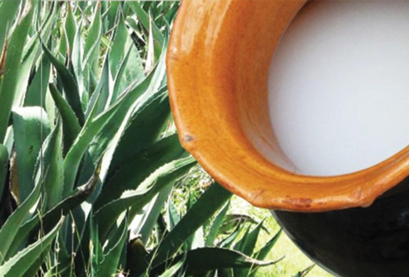 Tomar pulque en las Haciendas de Tlaxcala - pulque-1024x696