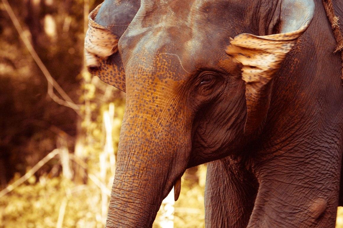 PATARA ELEPHANT FARM - 2