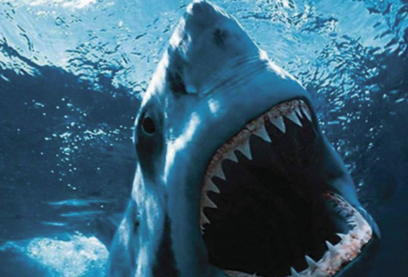 http://www.scifinow.co.uk/news/jaws-the-bloody-true-story-behind-the-horror-classic/