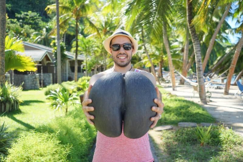 Seychelles - coco