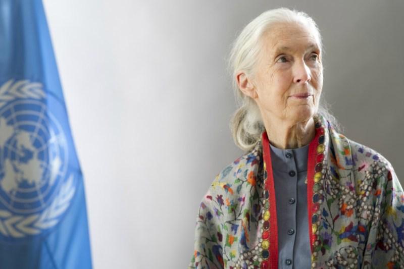 Mujeres que han cambiado el mundo - jane-goodall