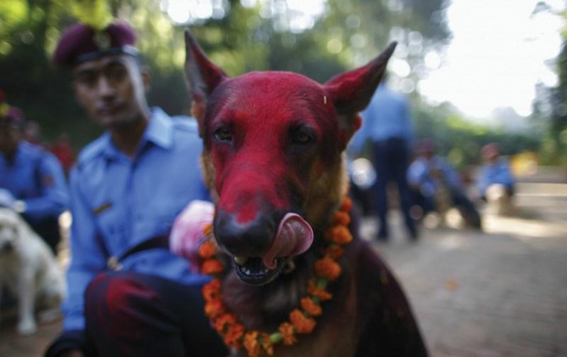 Los festivales de animales más curiosos del mundo  - 7-1