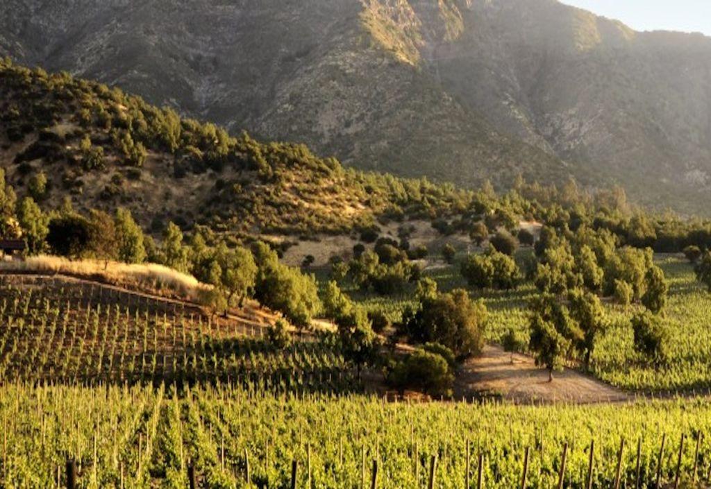 Conoce todo lo que tienes que saber sobre el vino chileno - Vino Chileno portada