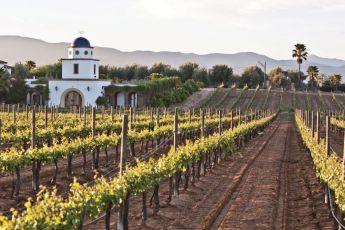 México: Tierra de Vinos - Mexico tierra de vinos - Portada