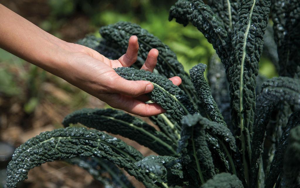 Dieta Baja en Emisiones - Mano y lechuga portada