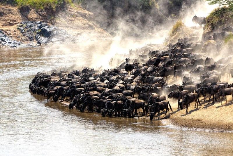 Safaris en Tanzania - La-gran-migracion_small